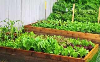 Салат для сада и огорода