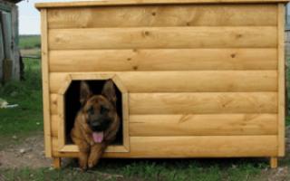 Как сделать будку для немецкой овчарки: размеры, чертежи, фото и видео