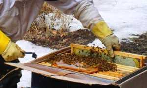 Зимняя подкормка пчел
