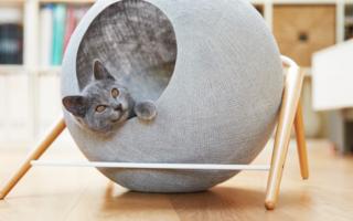Как сделать домик для кошки из коробки самостоятельно?